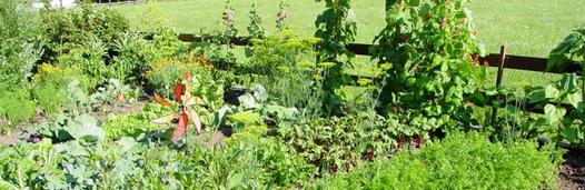 Gemüsebeet Anlegen | Bauspezi Ostbevern Im Herbst Ein Gemusebeet Anlegen